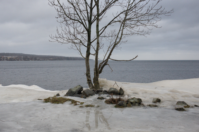 Tree on the shore, with the great lake in the background.