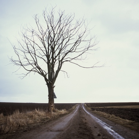 Tree beside a road leading straight to eternity