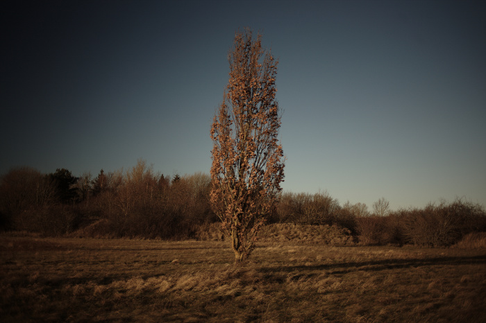 Single tree on a field, with more trees in the background. Framed by heavy vignetting.