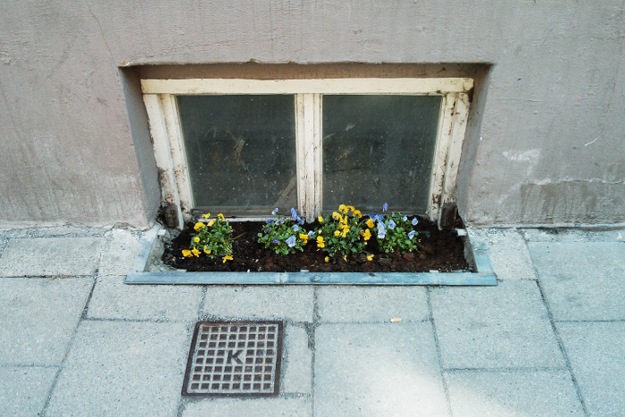 Low, cellar window on the street with some flowers planted in front of it