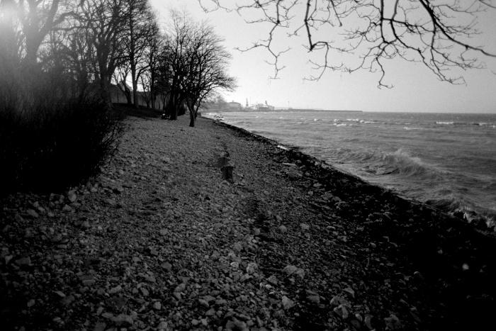Sea shore, sea, stones and some trees.