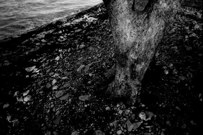 Tree trunk on sea shore.