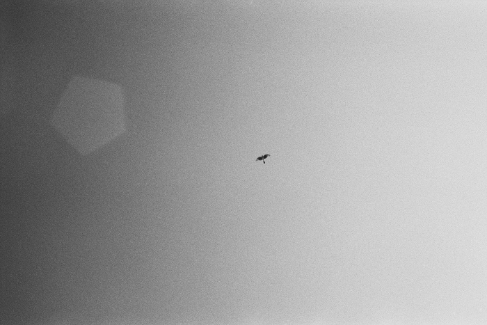 Bird in the sky shot from below, and a lens reflection.