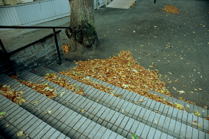 Outdoor stairs, autumn leaves gathered in a heap.