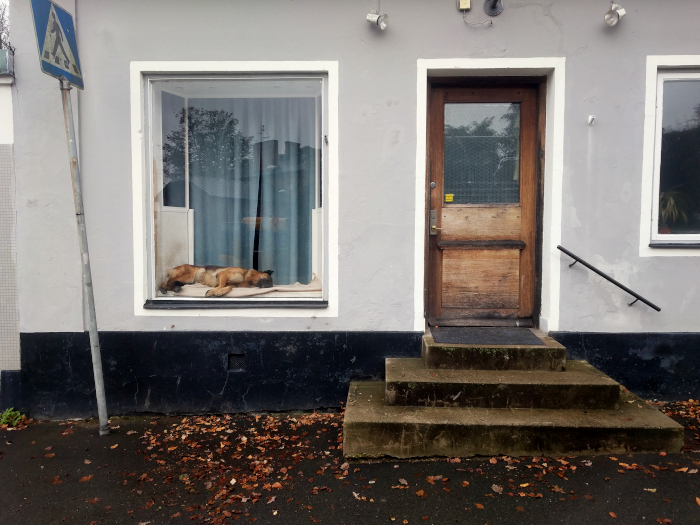 Street photo of a house with a dog resting in shop window.